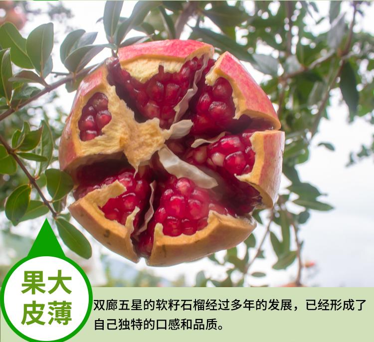 软籽石榴详情页 (20).jpg