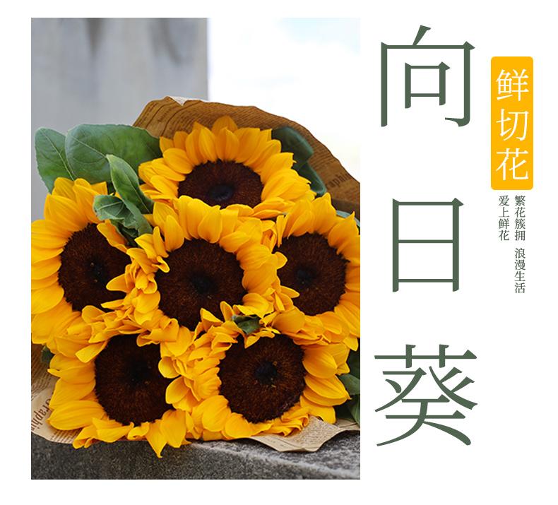 向日葵详情页_01.jpg